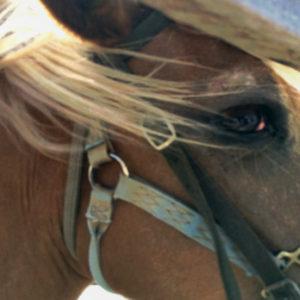 Spirit of the Horse Native American Festival - Day 1 @ Farmington Polo Grounds | Farmington | Connecticut | United States